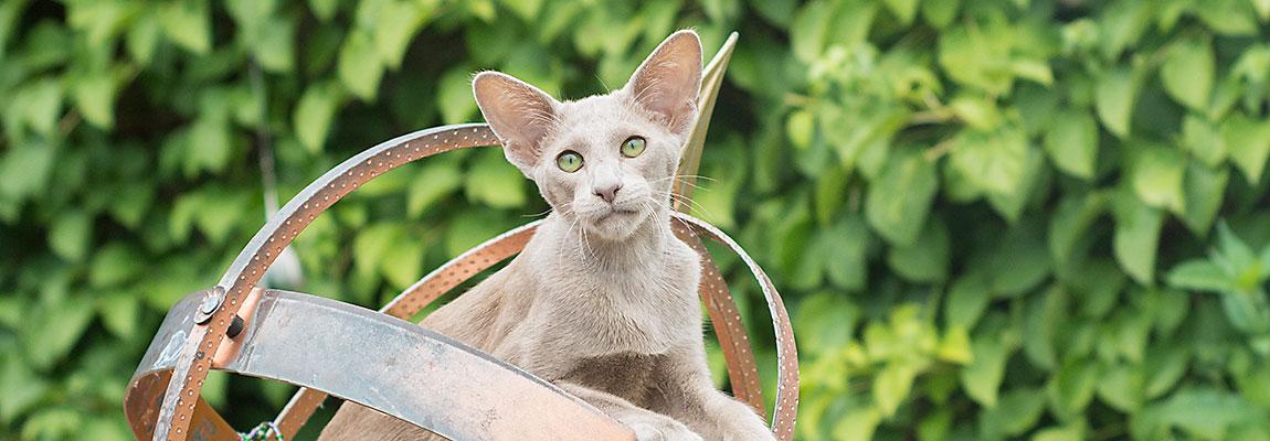 Fotoshoots van katten kunnen ook buiten!
